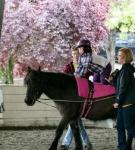 NCEFT-HorseShow-1-106