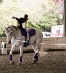 NCEFT-HorseShow-1-45