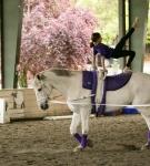 NCEFT-HorseShow-1-49