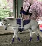 NCEFT-HorseShow-1-50