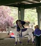 NCEFT-HorseShow-1-58